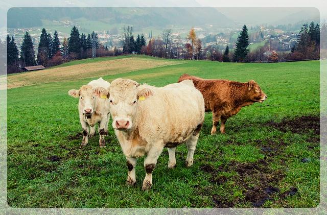 prime beef Salzburg
