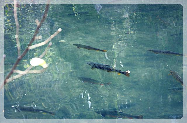 Bio-Fischzucht Krieg Salzburg